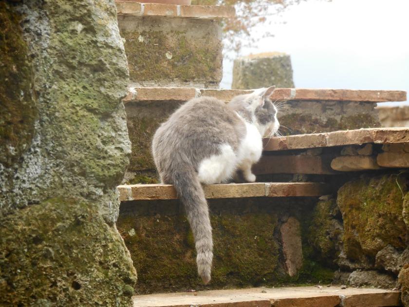 April 27, 2014 KittiesRome Countryside (221)